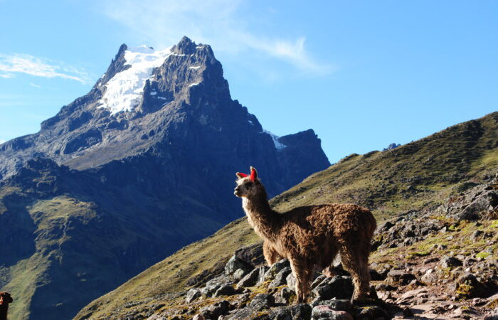 lares trek and short Inca Trail 4 days